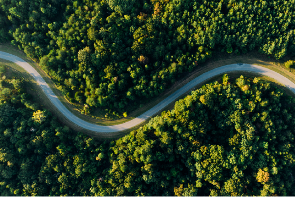 Aerial View Of A Narrow Road Winding Through Trees